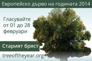 """Старият бряст от Сливен ще представи България в международен конкурс """"Европейско дърво на годината 2014 г."""""""