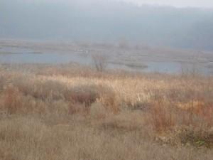 РИОСВ – Монтана участва в 42-то Среднозимно преброяване на зимуващите водолюбиви птици